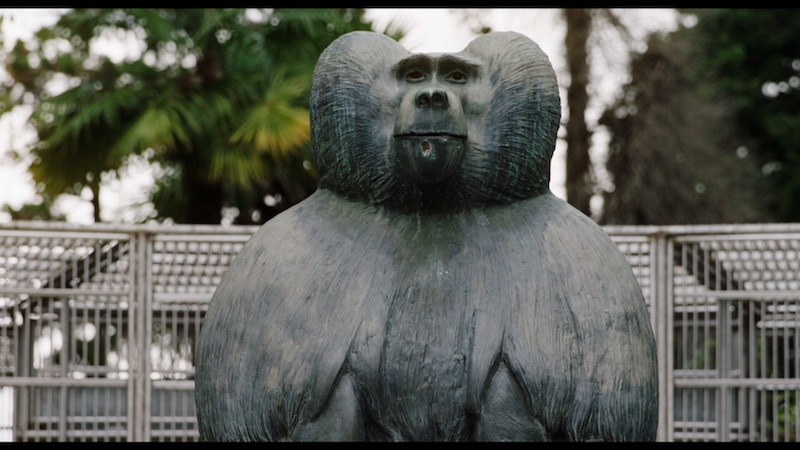 """Ouale lui Tarzan"" in premiera mondiala la TIFF. Din 6 octombrie in cinematografe!"