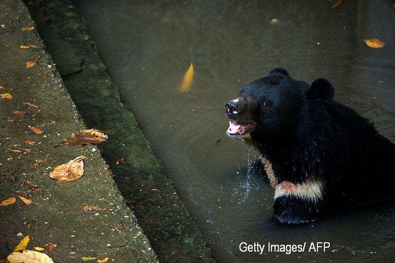 Vanator, atacat din senin de un urs, in timp ce avea asupra lui doar un arc si o sageata. Ce s-a intamplat cu barbatul. VIDEO