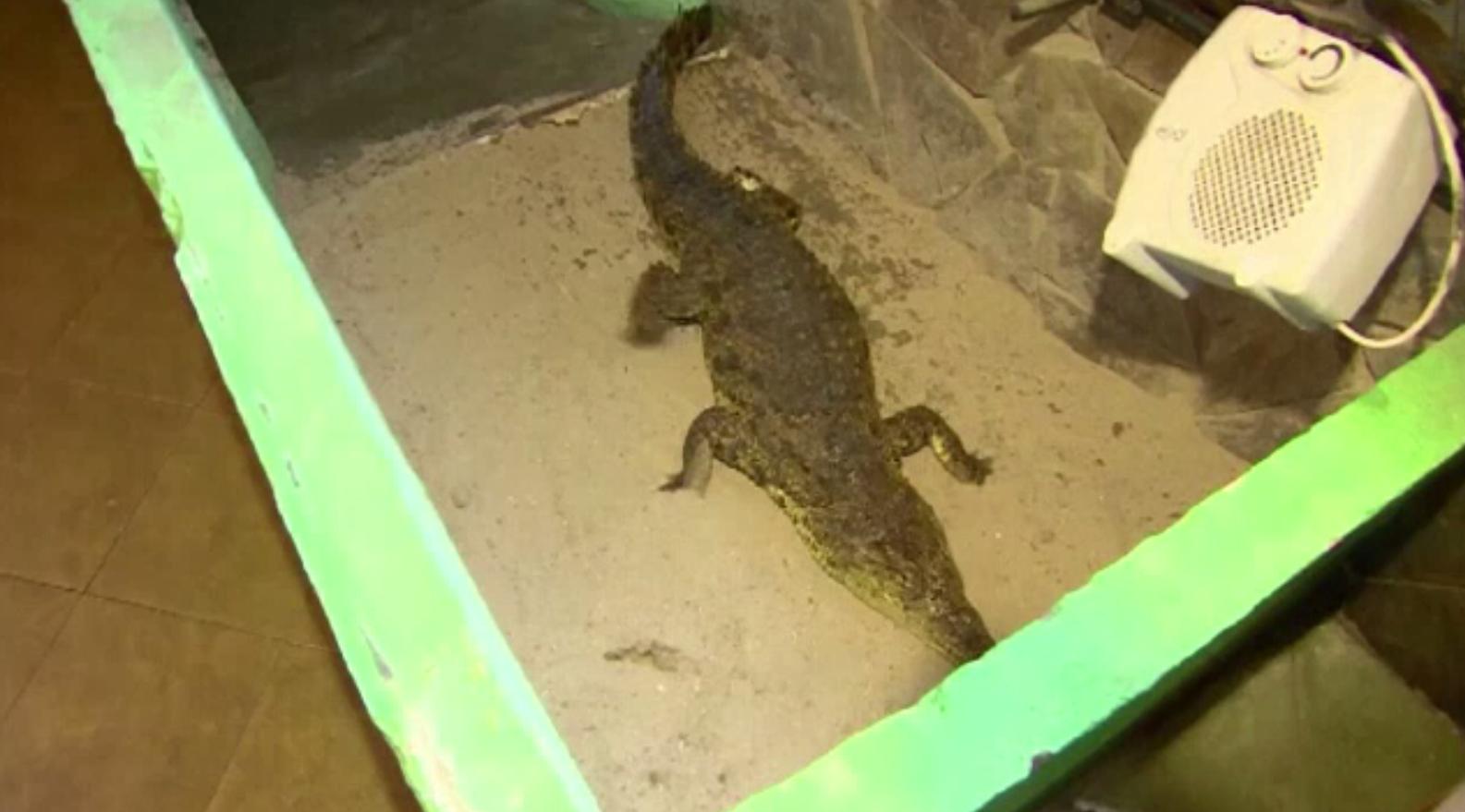 O femeie din Indonezia a fost devorată de un crocodil
