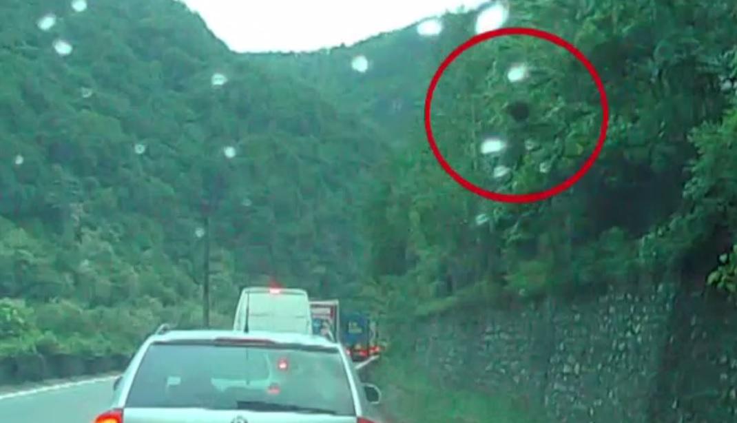 Pericol pe Valea Oltului. Întâmplarea prin care a trecut un șofer cu 2 copii în mașină