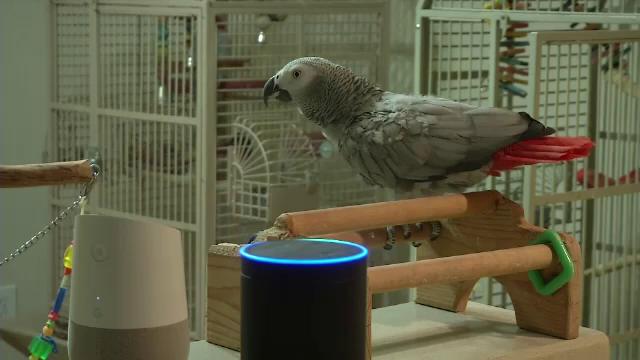Un papagal face senzație pe internet, după ce a învățat să folosească asistentul virtual Alexa