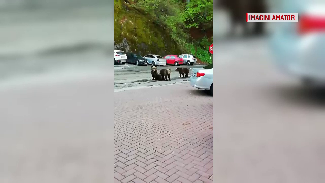 Hotel de la Vidraru, asaltat de urşi. Ce s-a întâmplat cu un turist care a luat o scândură