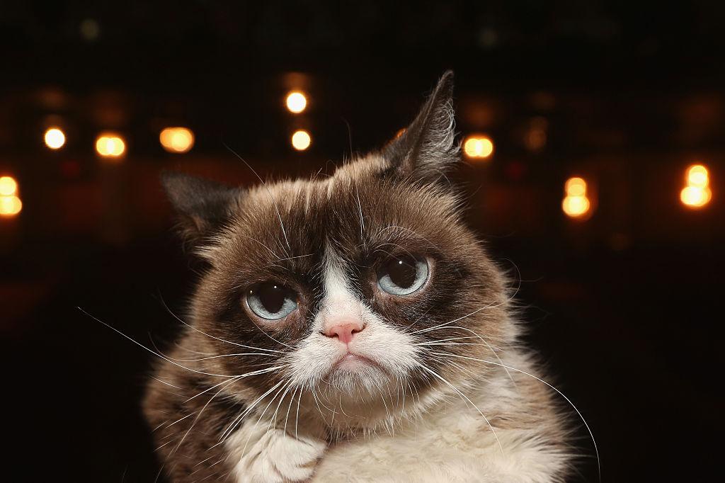 A murit faimoasa Grumpy Cat. Pisica avea 7 ani