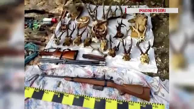 Doi suspecți de braconaj din Gorj au fost reținuți. Ce au găsit polițiștii în locuința lor