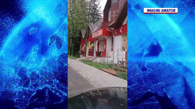 Un pui de urs, surprins la intrarea unui magazin, în Băile Tușnad