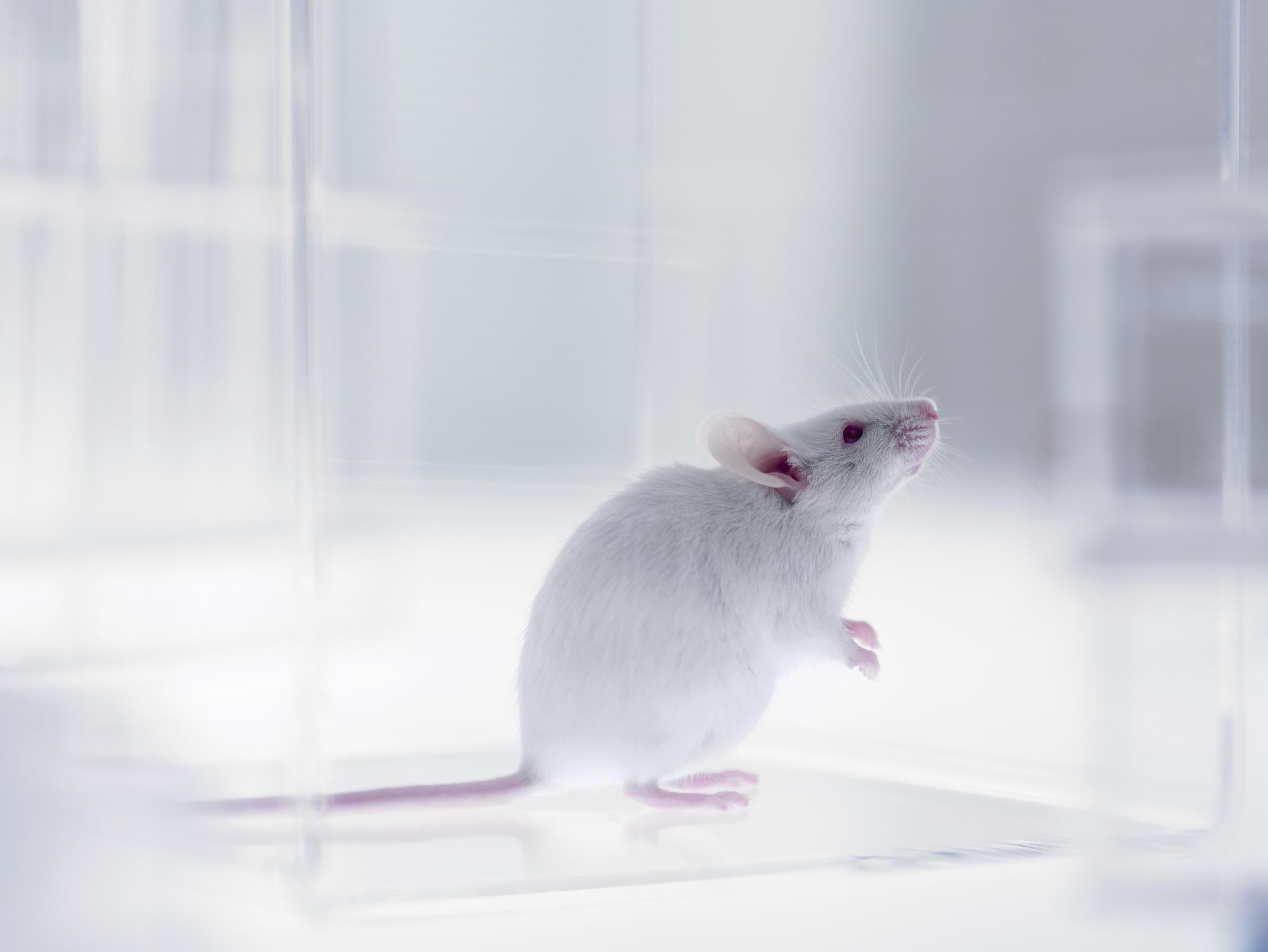 Studiu: Mamiferele pot respira prin anus în caz de urgență. De ce nu e o glumă și cum pot fi oamenii ajutați