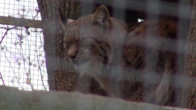 Grădina zoologică din Piatra Neamț va fi desființată, după ce a funcționat timp de 117 ani