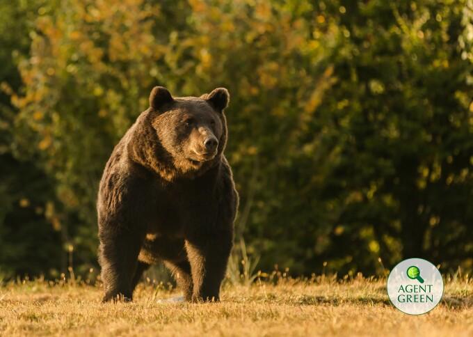 """Urs împușcat de un prinț. Premierul Cîțu: """"Se pare că nu toate informațiile sunt corecte"""""""