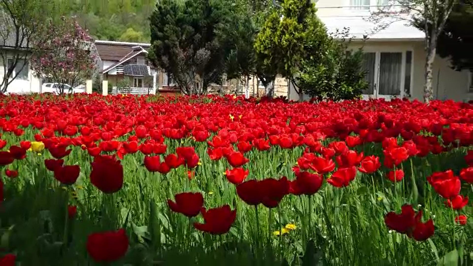 Florile s-au lăsat așteptate în acest an și au apărut mai târziu decât de obicei