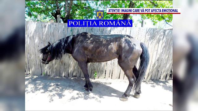 Scene revoltătoare într-o comună din județul Galați. Un bărbat și-a lovit cu picioarele și cu un par calul căzut la pământ