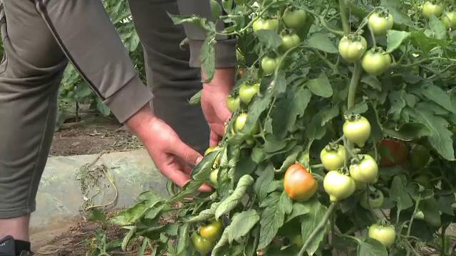 Programul care ar trebui să îi ajute pe producătorii de legume întârzie. Ce spun fermierii