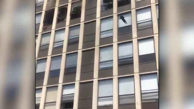 Momentul în care o pisică a sărit de la etajul 5 pentru a se salva dintr-un incendiu