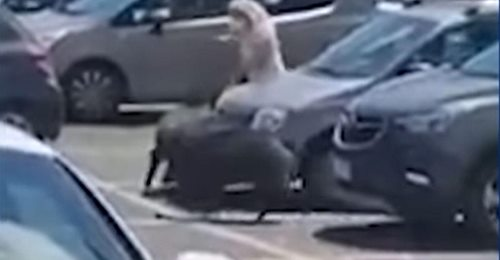 Video. O femeie a fost atacată de mistreţi în parcarea unui supermarket din Roma