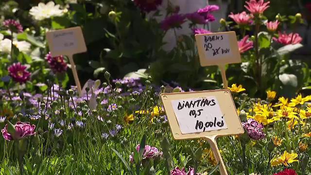 Românii alocă tot mai mulți bani pentru amanajarea grădinilor. Ce plante sunt la mare căutare