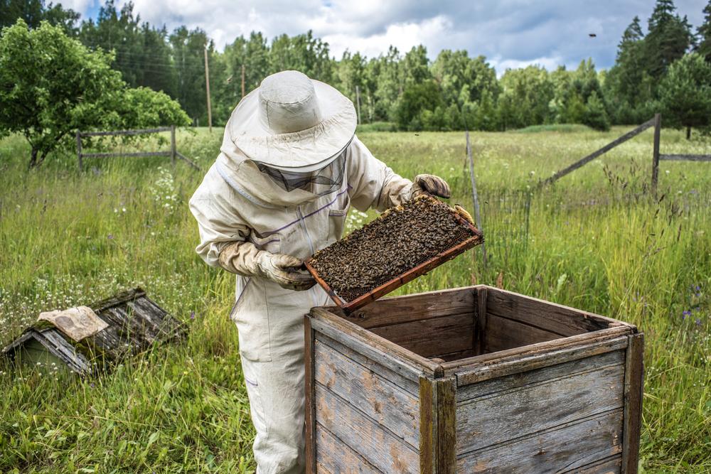 Un om de afaceri din Vrancea a murit după ce a fost înţepat de albine. A făcut șoc anafilactic
