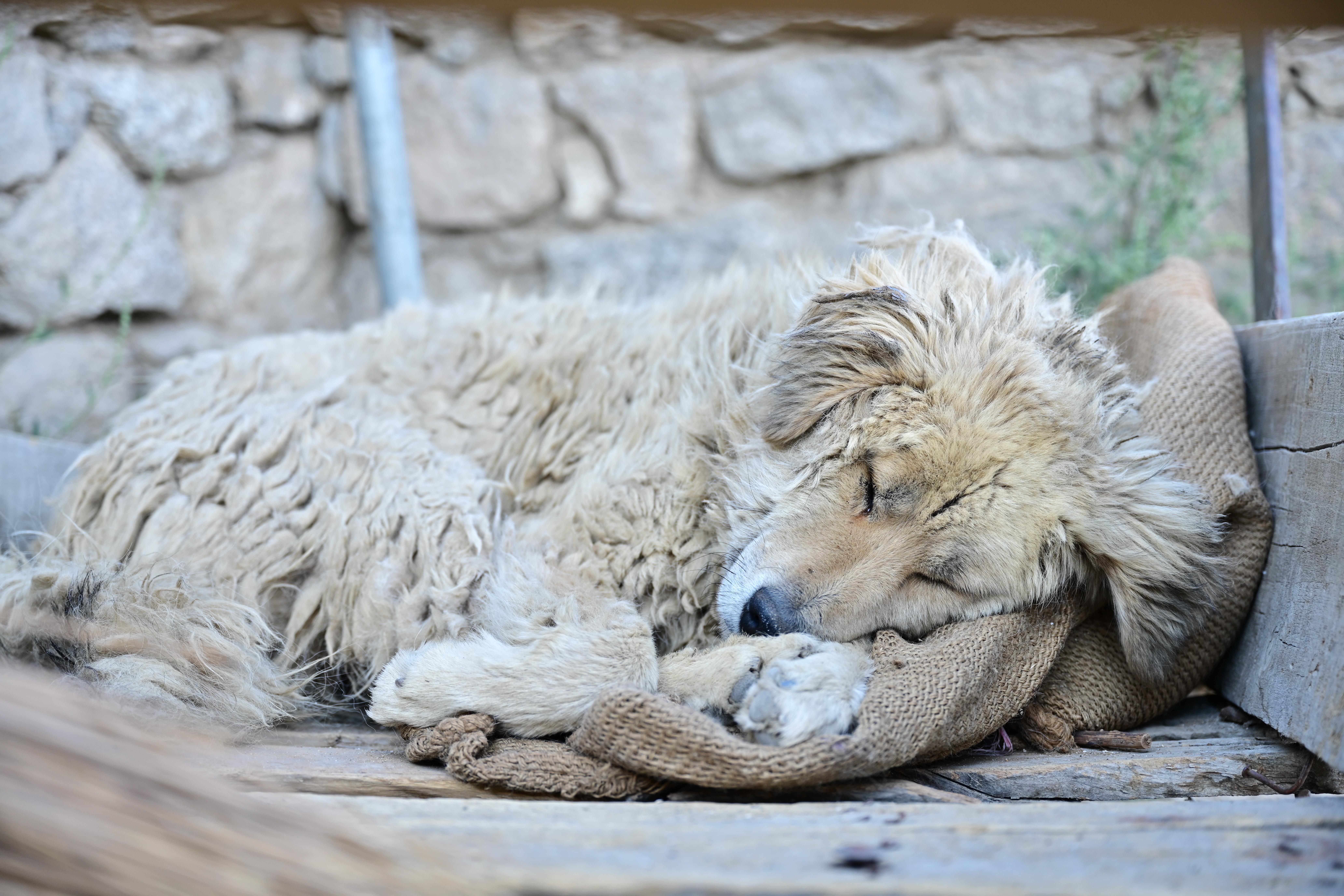 Câini morți, găsiți într-o pădure din Uricani. Poliția face cercetări