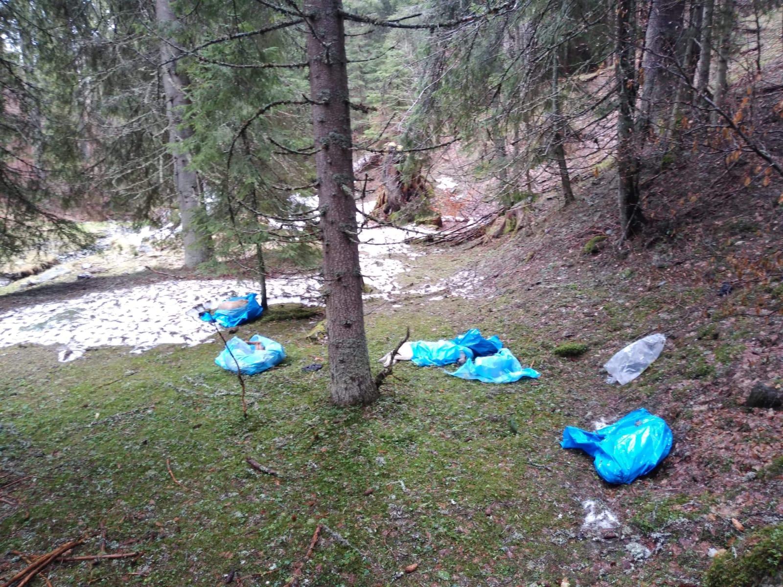 """Anchetă în cazul celor 27 de câini uciși și aruncați în saci de plastic în Parcul Național Retezat. """"Nu știm nimic"""""""