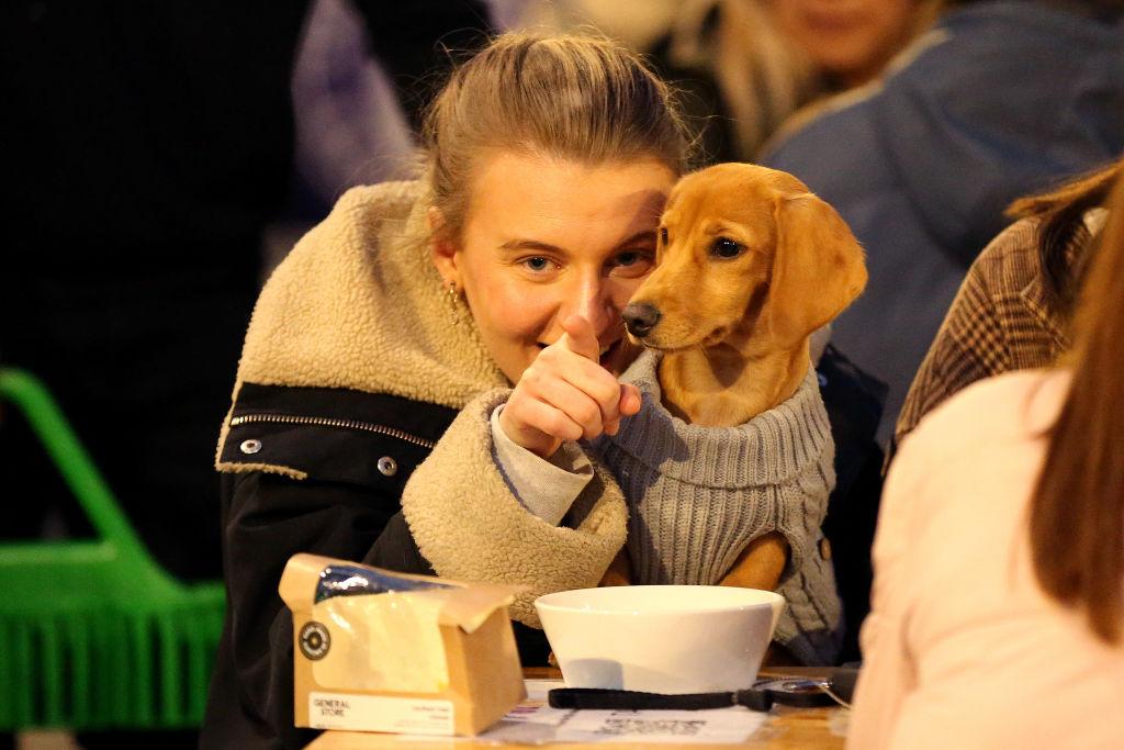 Studiu: Un nou tip de coronavirus care a apărut la câini se transmite și la oameni