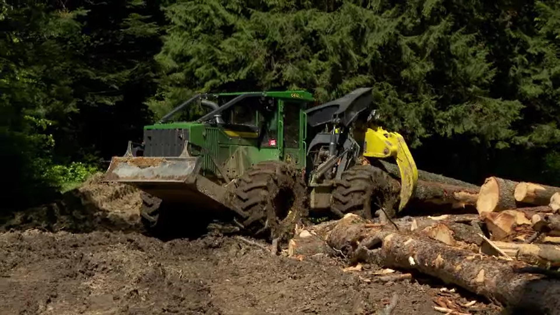 Protest în parcul natural Bucegi. O firmă forestieră taie de câteva luni sute de arbori bătrâni dintr-o pădure