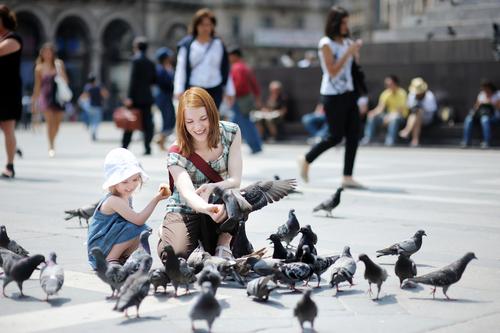 Amendă pentru cei care hrănesc porumbeii. Orașul din România care a adoptat această hotărâre