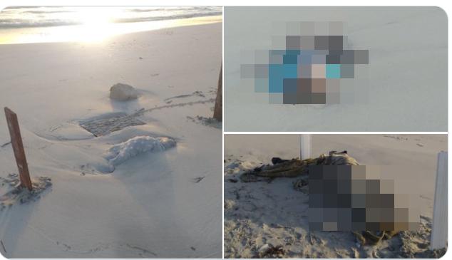 Imagini șocante cu cadavre de bebeluși și copii mici pe o plajă din Libia. Drama migranților