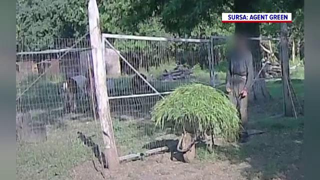Mai mulți cerbi lopătari ar fi ținuți în mod ilegal într-un complex de vânătoare de lângă București