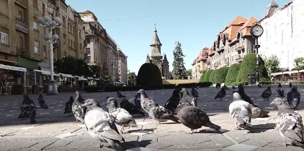 Hrănirea porumbeilor, interzisă în Timișoara. Cu ce sumă vor fi amendați cei care încalcă regula
