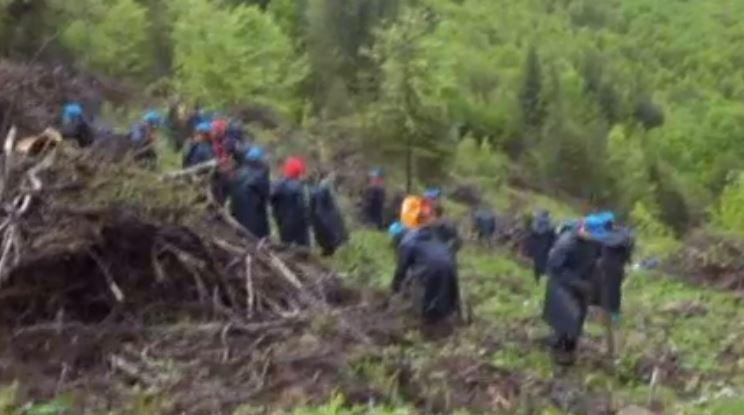 (P) Acțiune importantă de împădurire în Valea Secu, prin intermediul brandului Bucovina