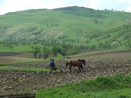 Vesti bune! Fonduri europene de 3 milioane de euro pentru agricultura eco