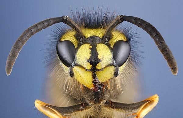 Sucul dauneaza grav sanatatii... daca inauntru se afla o viespe nervoasa!