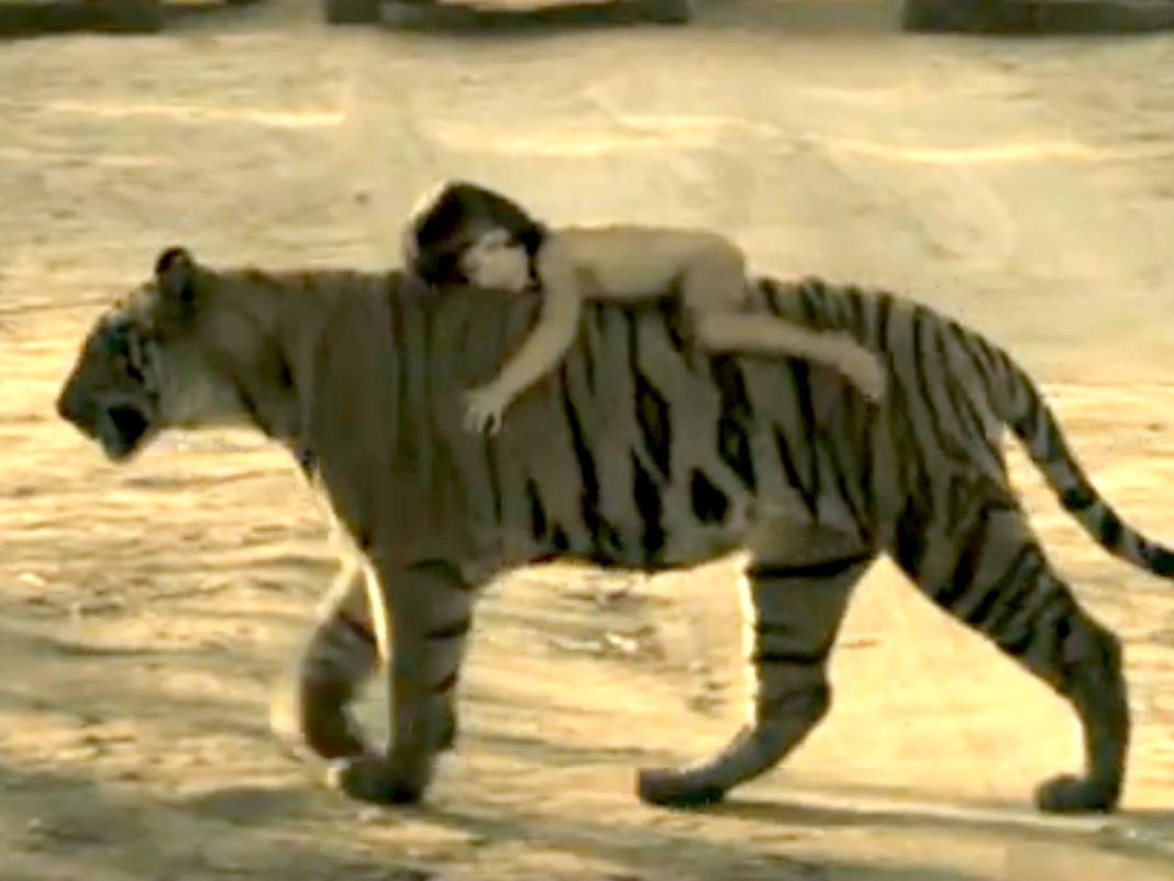 Trucaj sau fapt uimitor? Un copil calare pe un tigru, ca in Cartea Junglei