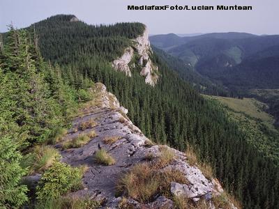 Zeci de hectare de arbori distrusi de gandaci, in Parcul Natural Bucegi. Nimeni nu ia nicio masura