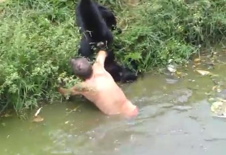 VIDEO. De rasul lumii. Un barbat beat, atacat de maimute la gradina zoologica