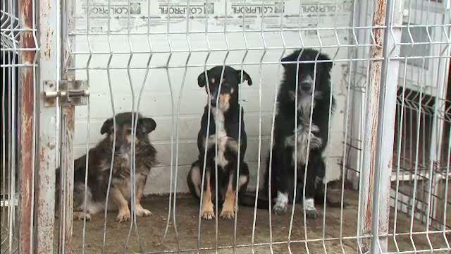 Sri Lanka autorizeaza uciderea celor trei milioane de caini vagabonzi de pe teritoriul sau