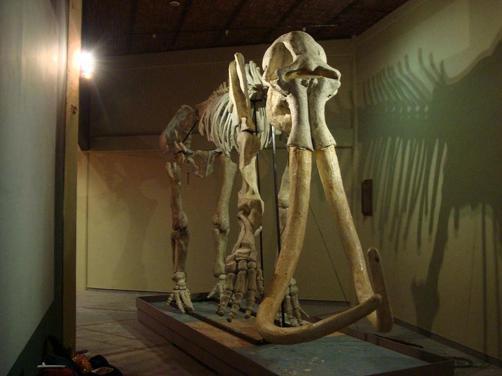 Un schelet de mamut, descoperit in apropiere de Paris. Cercetatori: