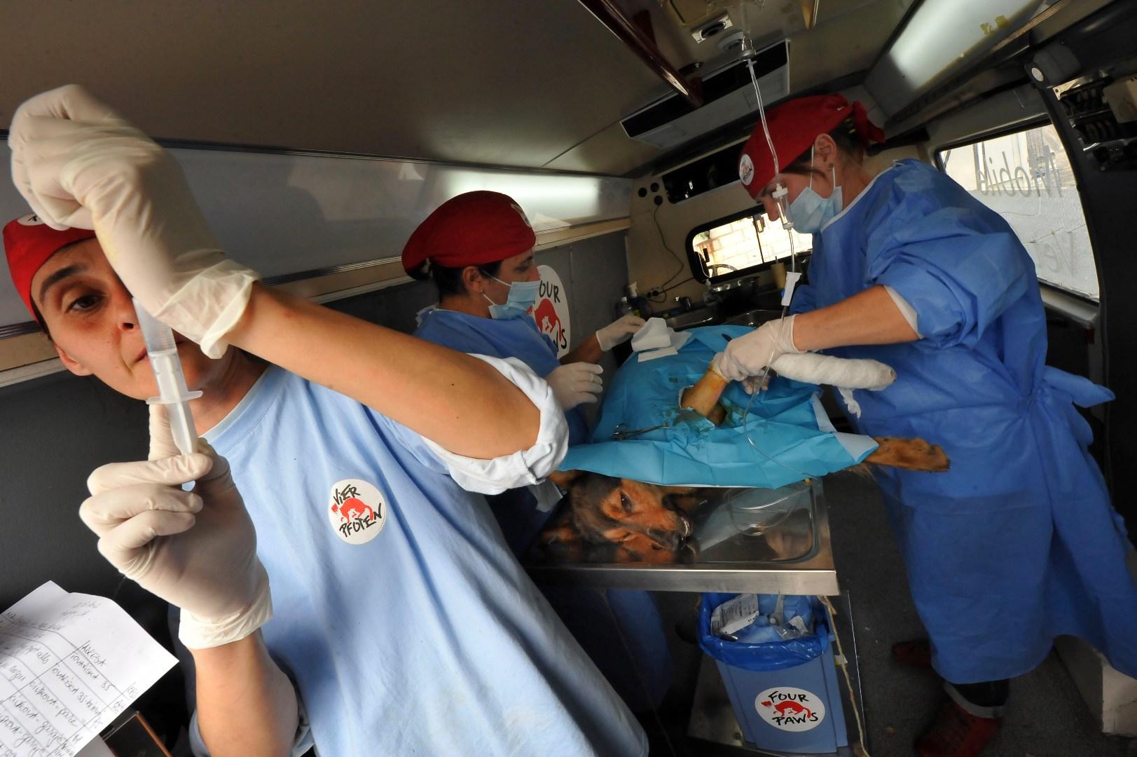 Campanie de sterilizare a cainilor si pisicilor fara stapan din municiul Dej
