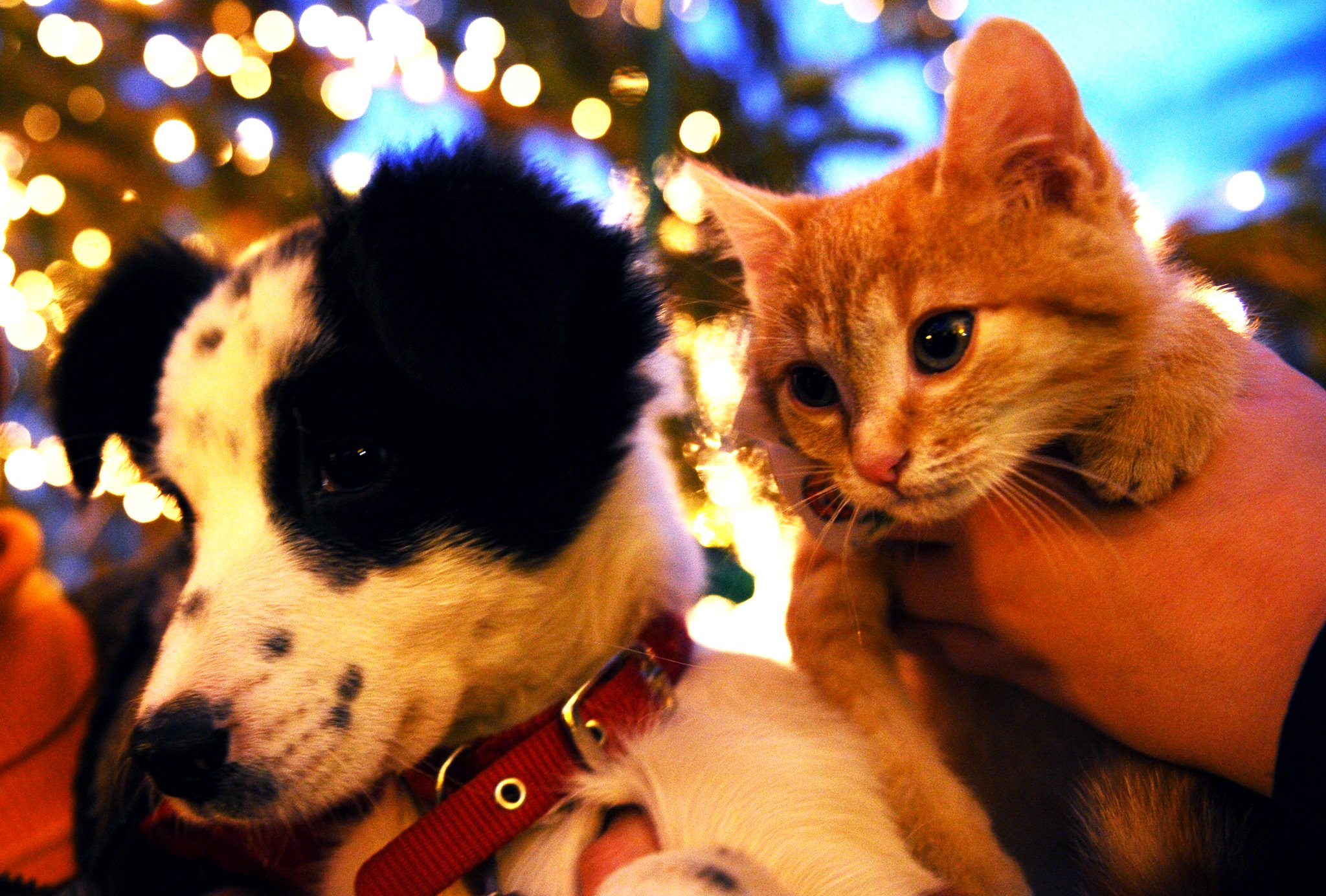 Campanie de adoptii pentru animalele la targul de Craciun de la Sibiu