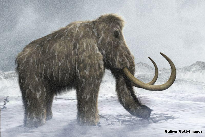 Fosilele unui mamut lanos, vechi de 40.000 de ani, descoperite in Siberia. Specia ar putea fi readusa la viata prin clonare