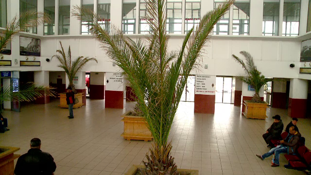 Gara din Constanta s-a transformat in gradina botanica. Au fost adapostiti peste 50 de palmieri adusi de pe faleza din Mamaia