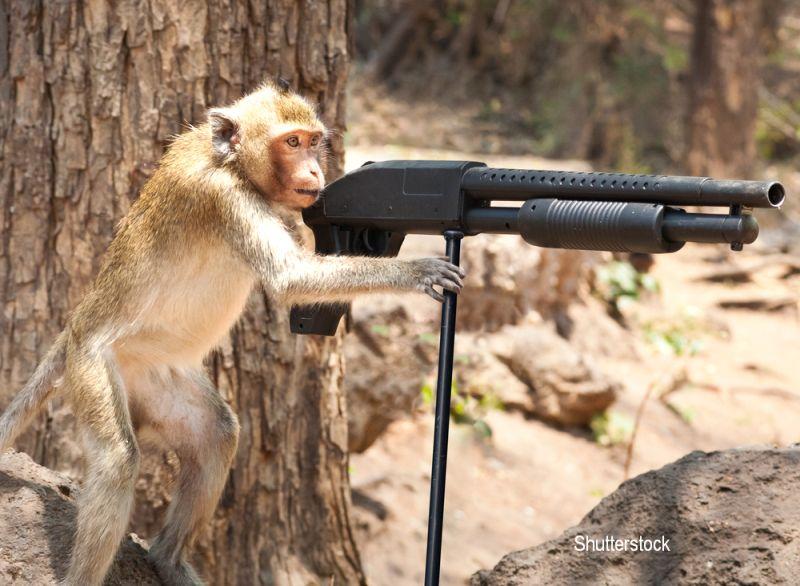 Atacul unei maimute a declansat un adevarat razboi local in Libia. Peste 20 de oameni au fost ucisi iar alti 50 raniti