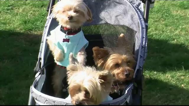 Festivalul canin din Beverly Hills: patrupedele au participat la parade de modă