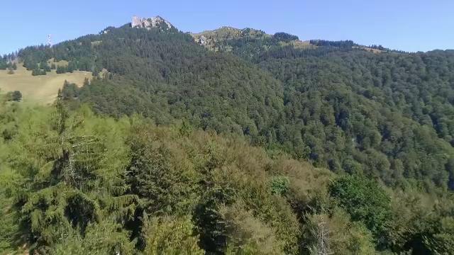 Greenpeace ne ajută să salvăm pădurile virgine din România. Defrișările, de neoprit