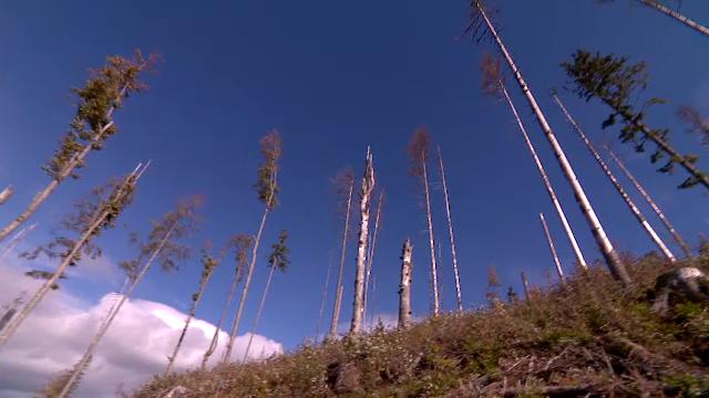 Percheziţii la persoane bănuite că ar fi defrișat şi ar fi furat arbori din fondul forestier naţional