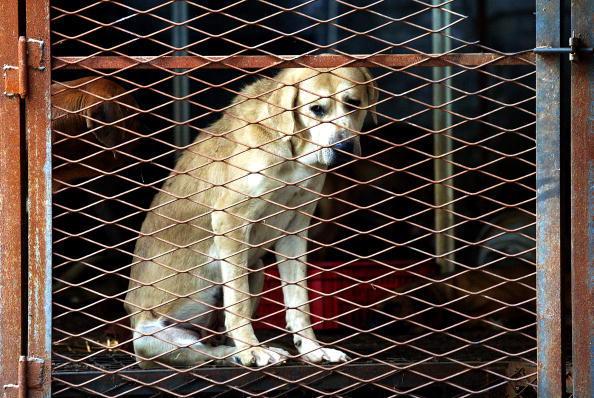 Coreea de Sud închide cel mai mare abator de câini. Câte animale sunt consumate anual