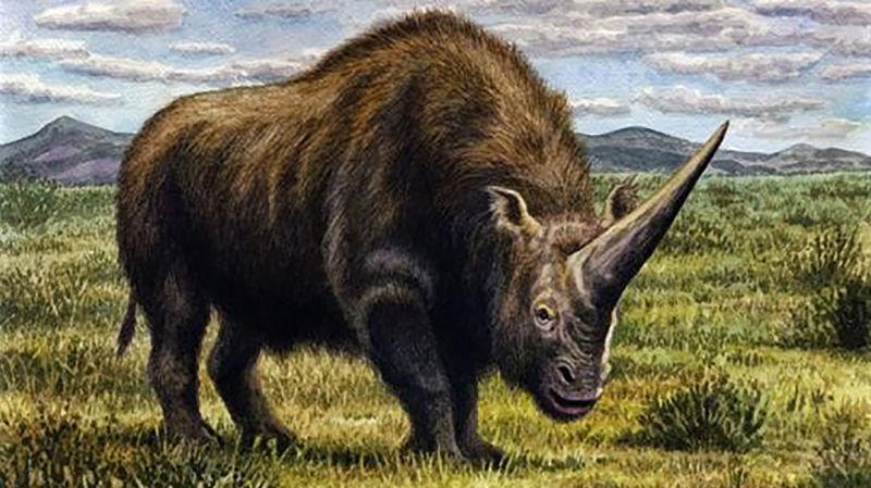 Descoperirea cercetătorilor despre o specie de rinocer denumită