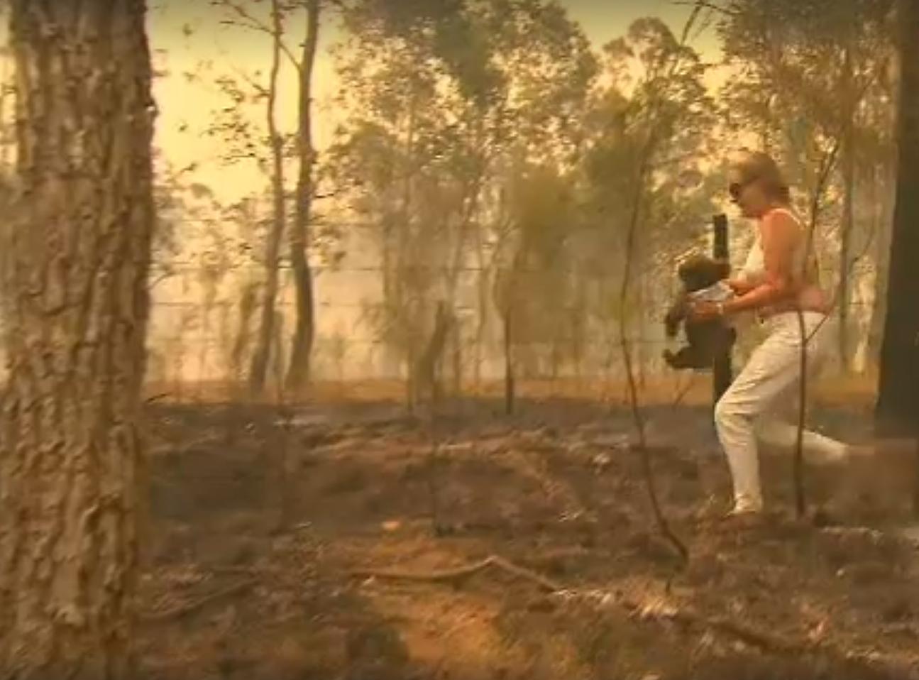 Un koala devenit celebru după ce a fost salvat din flăcări în Australia a murit