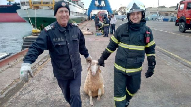 Parlamentarii europeni vor o anchetă riguroasă în cazul morții celor 14.000 de oi în Portul Midia