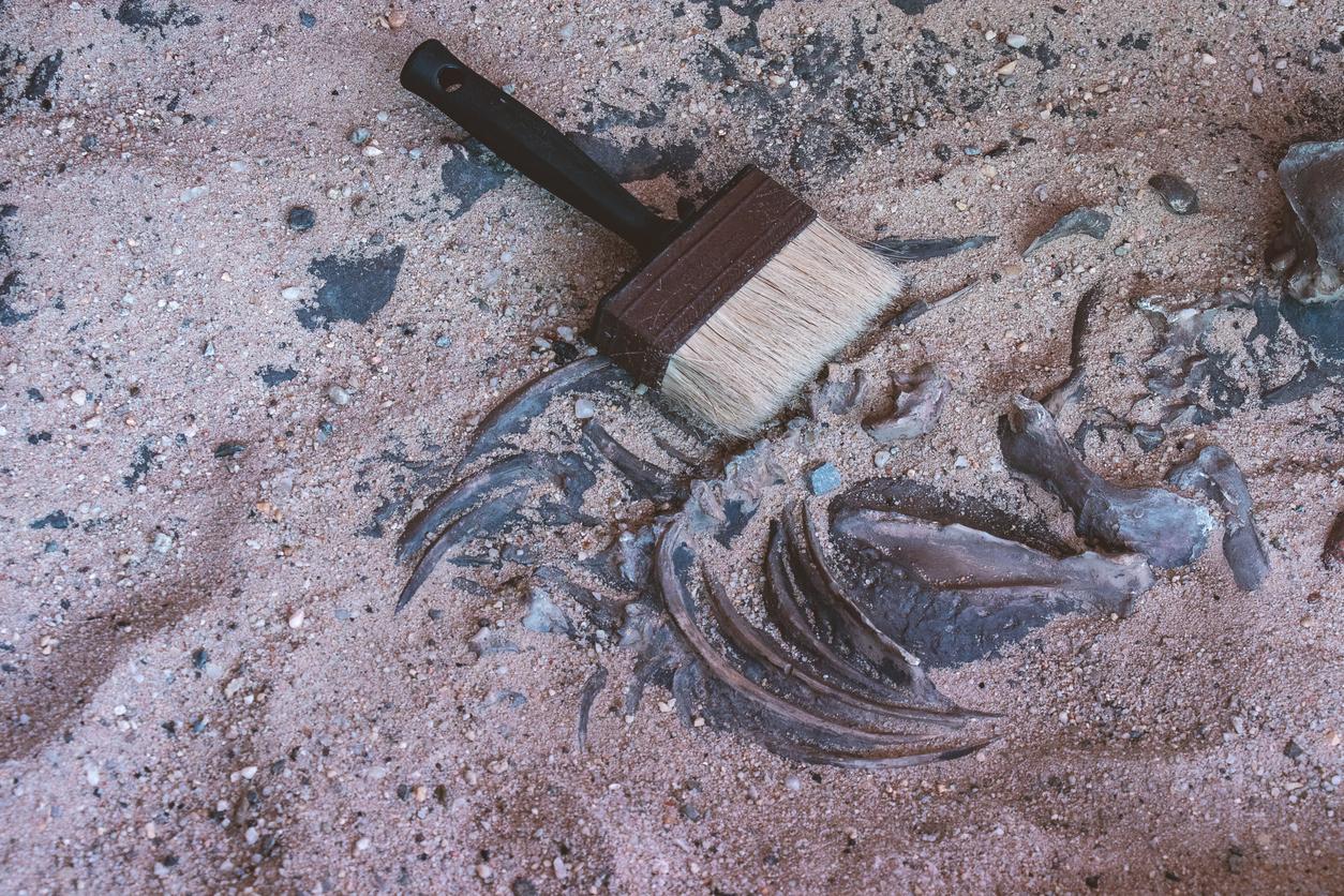 Creatura preistorică conservată perfect, descoperită în Siberia. Cu ce animal seamănă