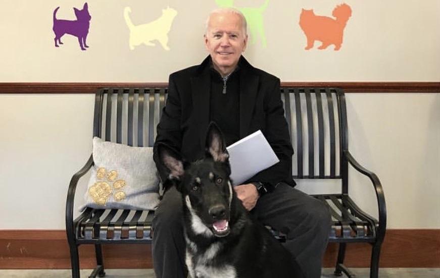 Ciobănescul german al lui Joe Biden, primul câine salvat de la adăpost care ajunge la Casa Albă