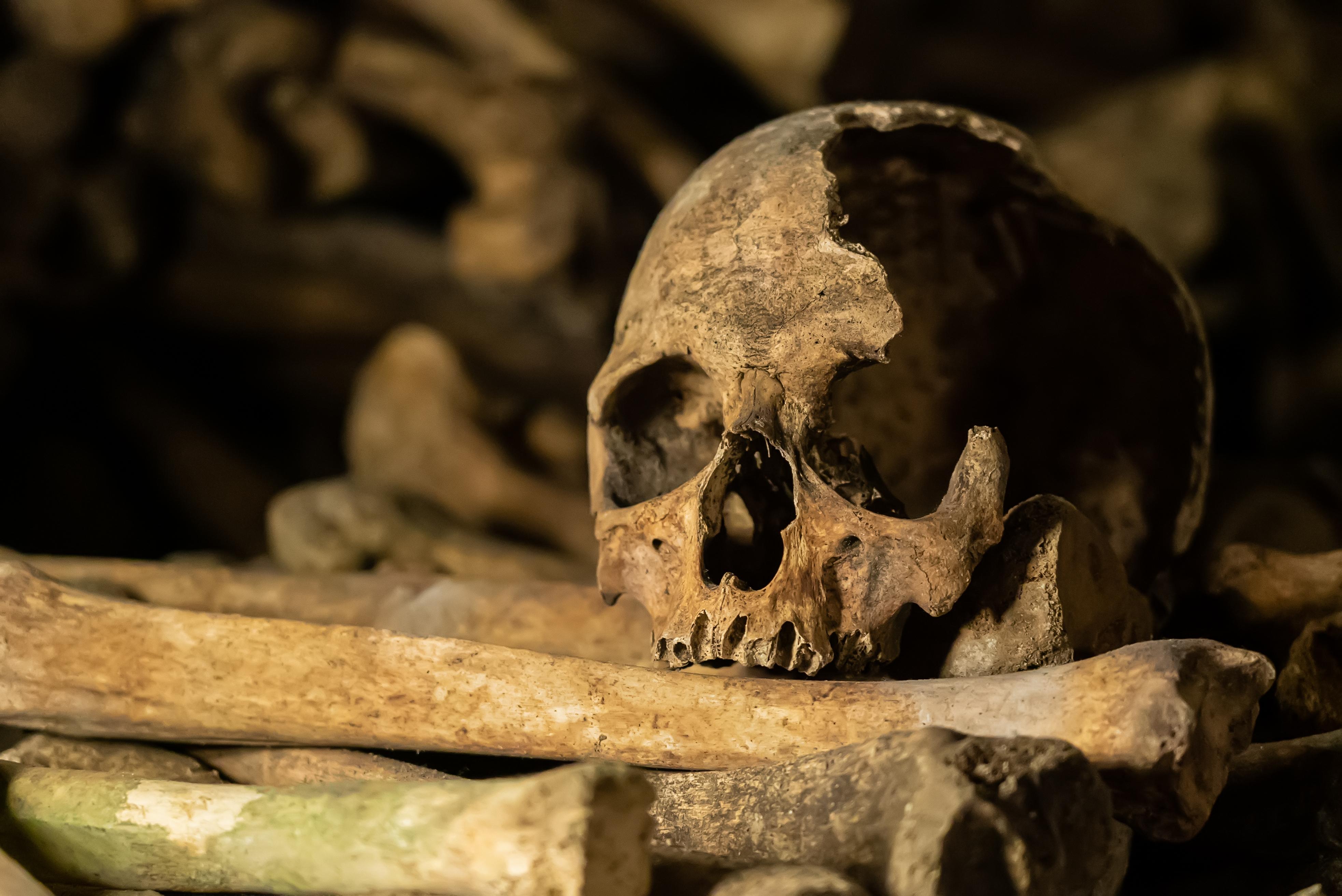 Arheologii au descoperit craniul unui
